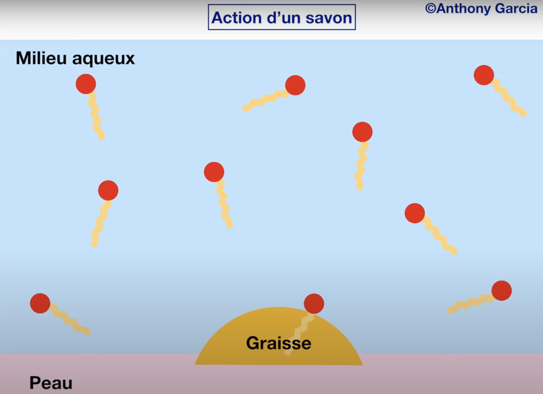Action d'un savon (vidéo)